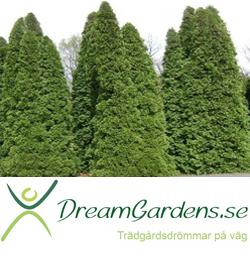 dreamgardens-se
