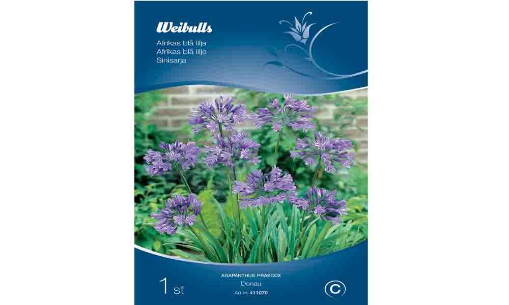Afrikas blå lilja från Weibulls
