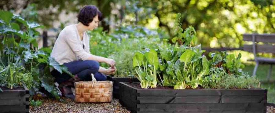 Hasselfors Gardens Odlingsbänk