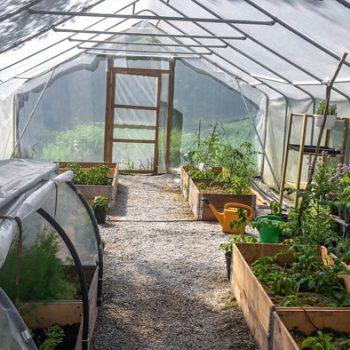 Alla kan odla grönsaker