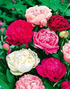 Växter i alla färger