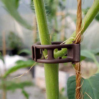 Tomatclips från Gjordnära Tunnelväxthus